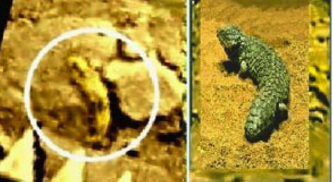Une créature à la surface de Vénus