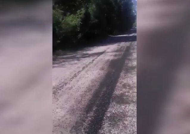Des nuées infernales de mouches ont ravagé deux villages russes