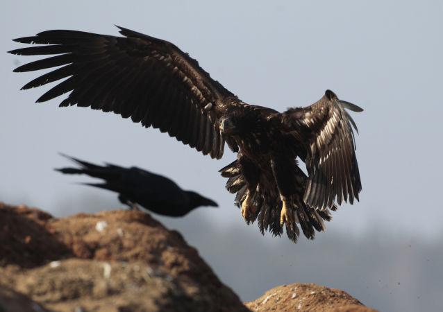 Un aigle et un oiseau