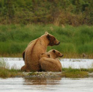 L'ourse avec des oursons