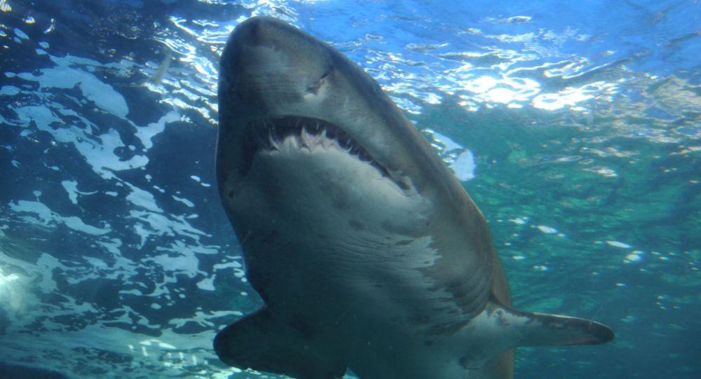 Un grand requin s'approche d'un bateau comme dans «Les Dents de la mer» (vidéo)