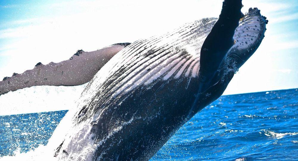 Une baleine (image d'illustration)
