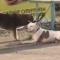 Теперь ты свободен: в Новороссийске бездомная собака отвязала от забора породистого пса