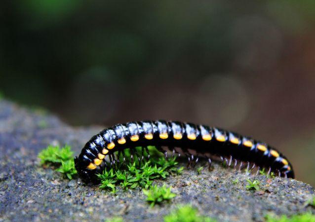 Une larve