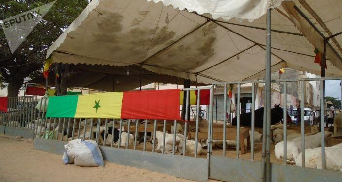 Un enclos à moutons affichant un drapeau du Sénégal à Dakar, le vendredi 19 juillet 2019, avant le coup d'envoi du match Sénégal-Algérie, finale de la CAN.
