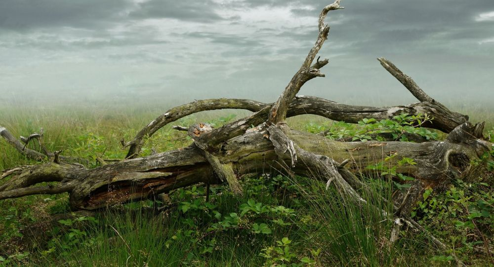 Un arbre cassé (image d'illustration)