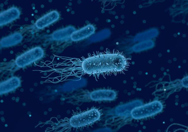 Des bactéries (image d'illustration)