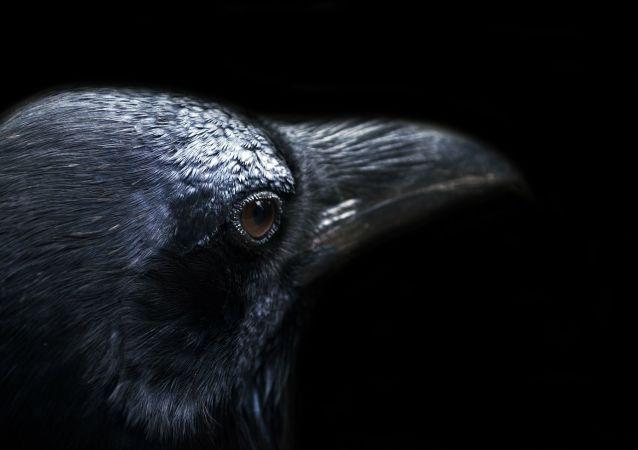 Un corbeau (image d'illustration)