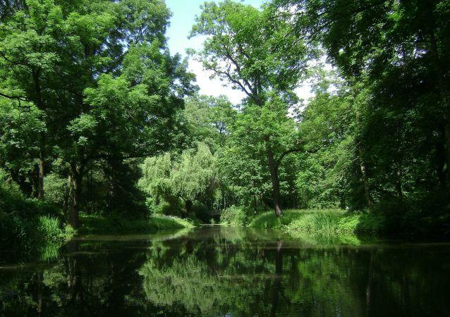 Une forêt (image d'illustration)