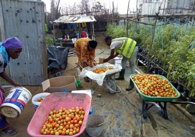 Sur le site de production d'Agrolight dans le nord d'Abidjan