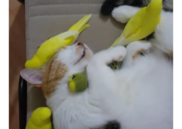 Une amitié entre chat et oiseau, est-ce possible?