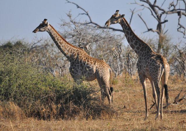 Tourisme en Afrique