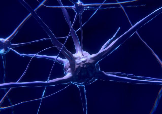 Neurone (image d'illustration)