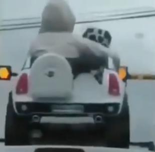 Danger mortel ou jeu amusant? Ce conducteur met ses enfants sur le toit de sa voiture