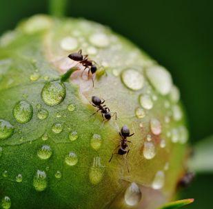 des fourmis (image d'illustration)