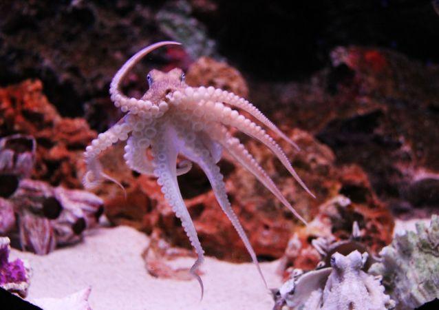 pieuvre (image d'illustration)