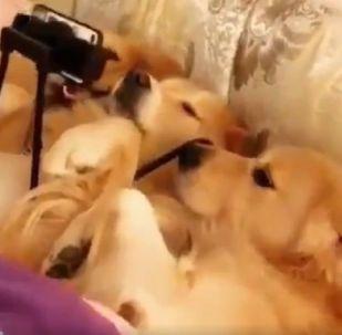 Qui n'aime pas traîner au lit après une dure journée de travail?