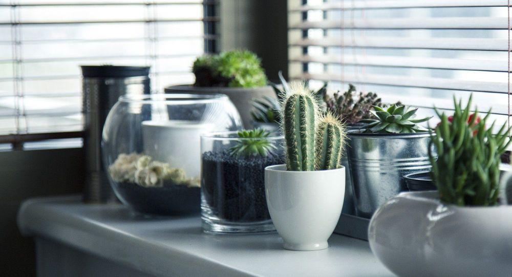 Plantes, image d'illustration