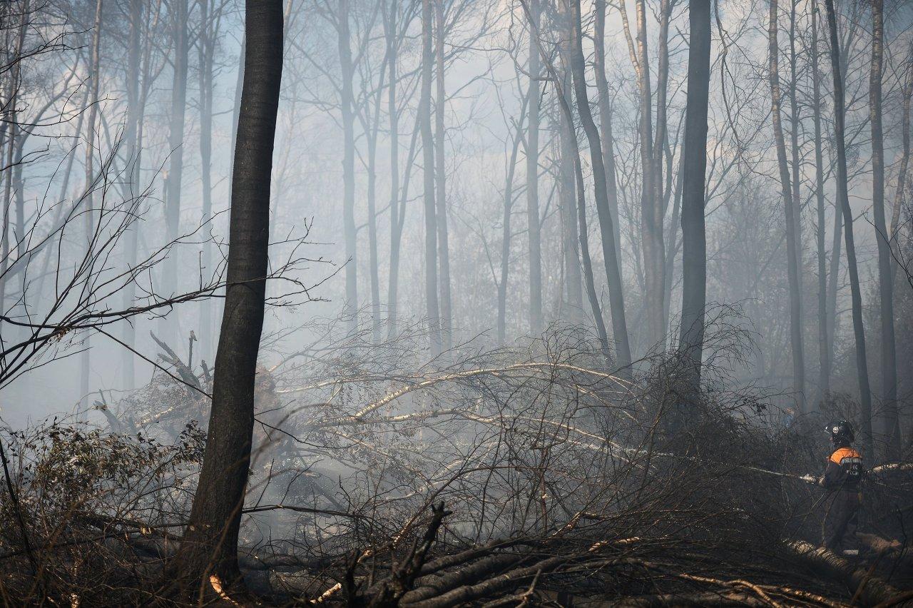Un feu de forêt dans la région de Tver