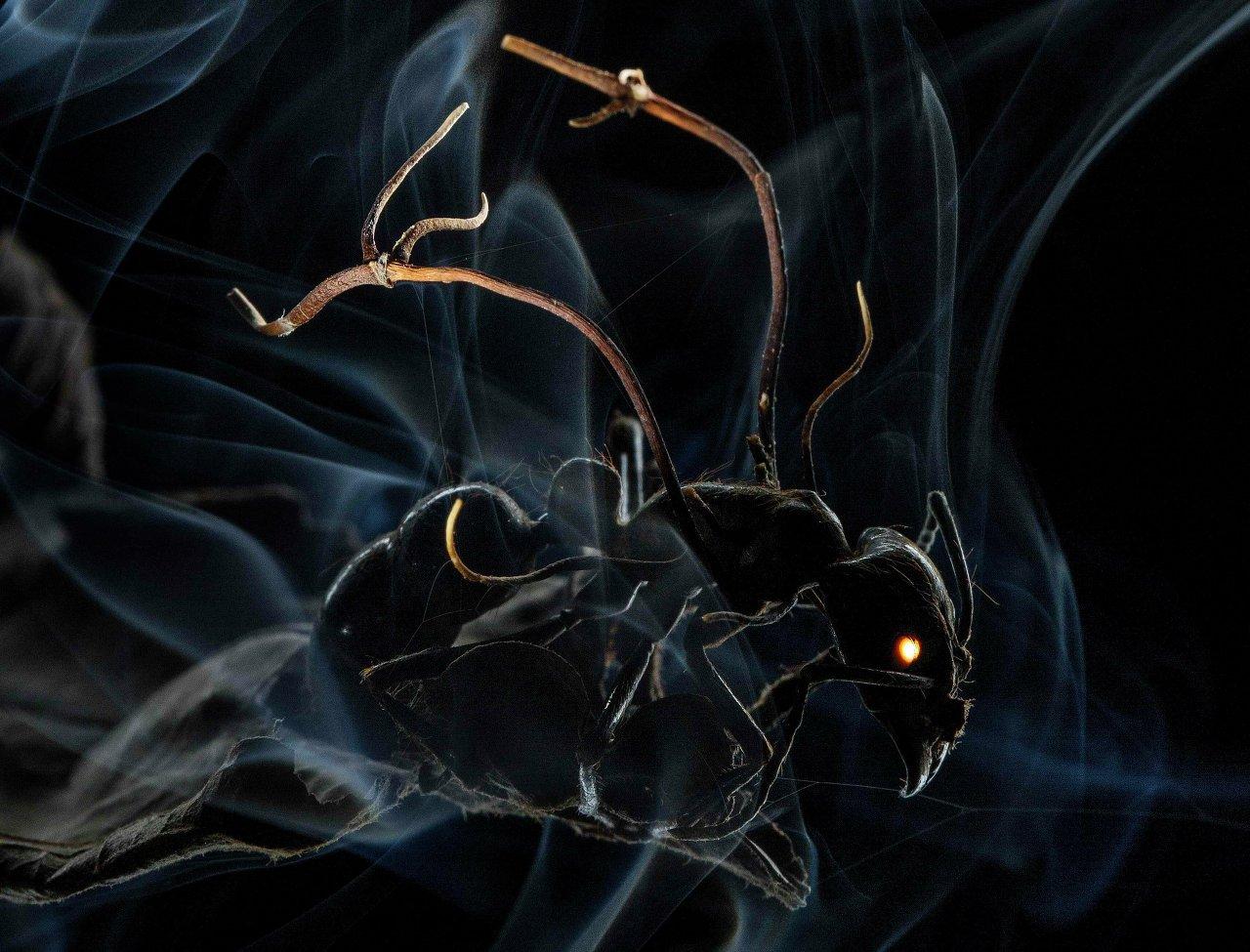 Photo macroscopique d'une fourmi se faisant lentement tuer par des spores de champignon, qui ont pénétré son exosquelette. Une photo d'Anand Varma