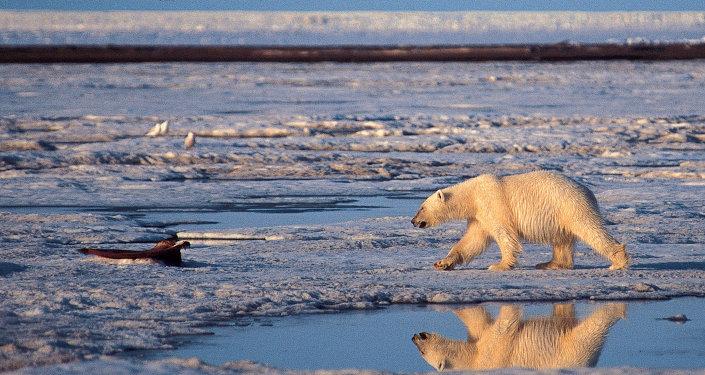 """Résultat de recherche d'images pour """"problèmes environnementaux, Russie"""""""
