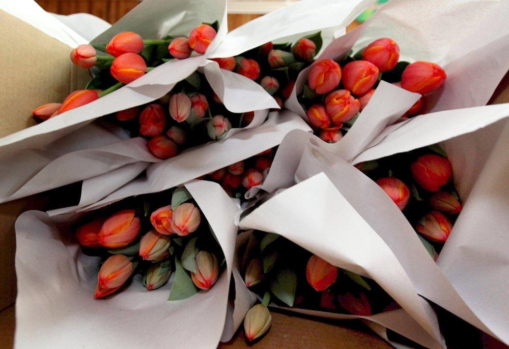 Bouquets de tulipes cultivées pour la fête du 8 mars, dans une orangerie de Vladivostok