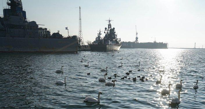Cygnes à la base navale russe de Baltiïsk