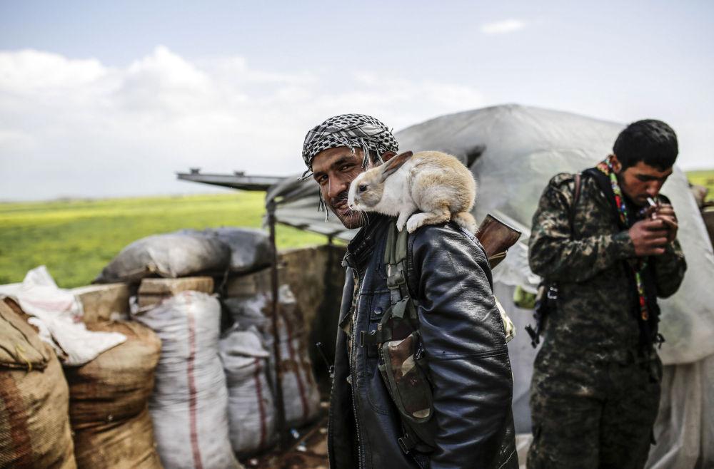 Un combattant kurde près de la ville syrienne de Kobané libérée le 26 janvier des extrémistes du groupe Etat islamique