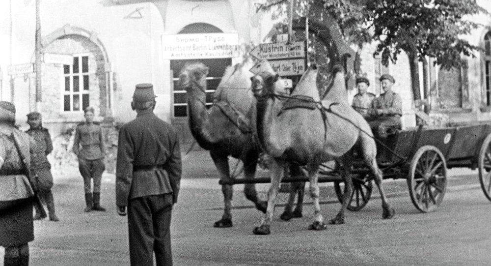 Les chameaux qui ont marché de Stalingrad jusqu'à Berlin