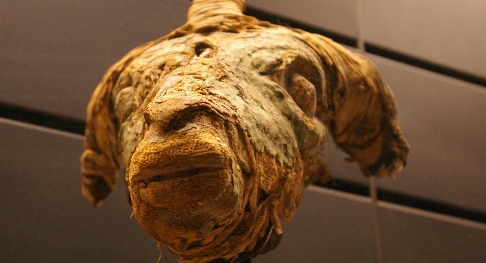Une momie de mouton