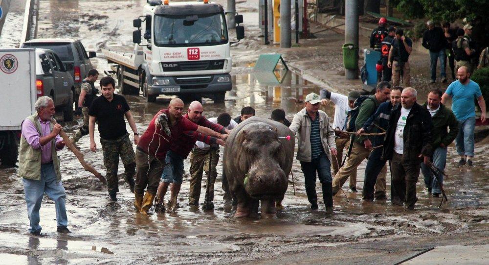 Inondations à Tbilissi