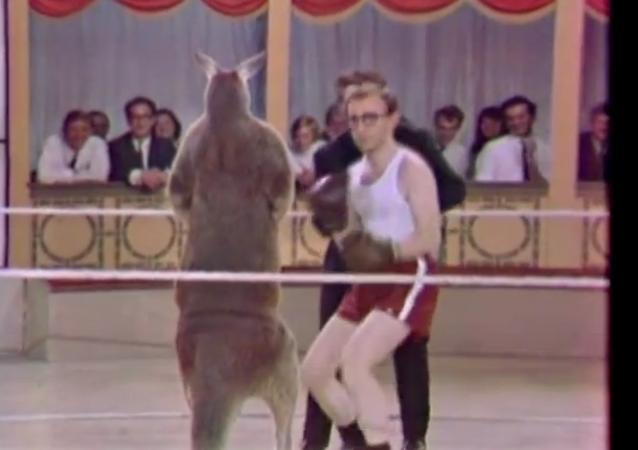 Woody Allen vs un kangourou