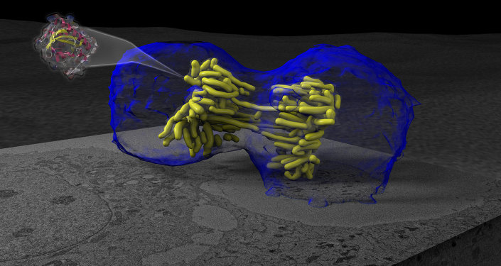 Processus de mitose (division cellulaire)