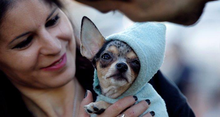 Femme avec un chien. Image d'illustration
