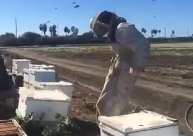 Un apiculteur malheureux