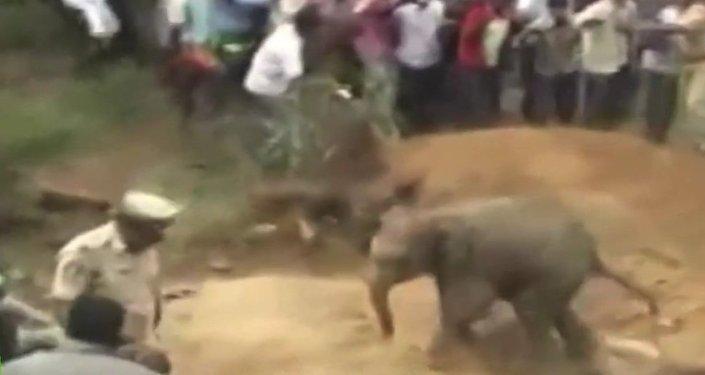 Sauvetage d'un jeune éléphant tombé dans un puits en Inde