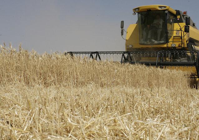 Récolte de blé dans la région russe de Rostov-sur-le-Don