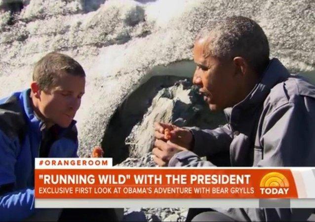 Obama mange les restes d'un saumon laissés par un ours