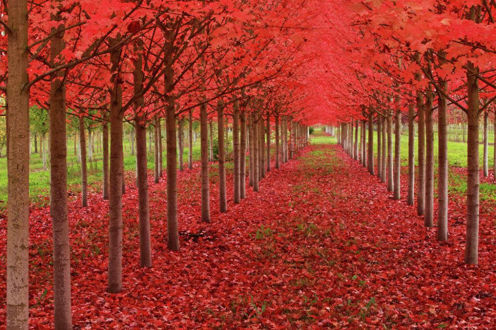 Saint Louis, Oregon, sous la coupole rouge-sang de l'automne
