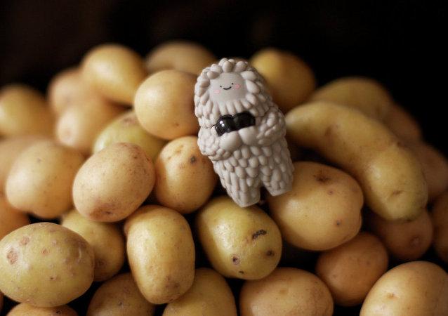 Pomme de terre (Image d'illustration)