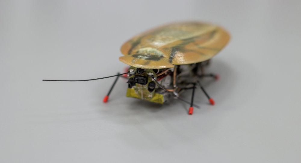 """Cafard France un robot-cafard """"de combat"""" conçu à des fins secrètes - sputnik france"""