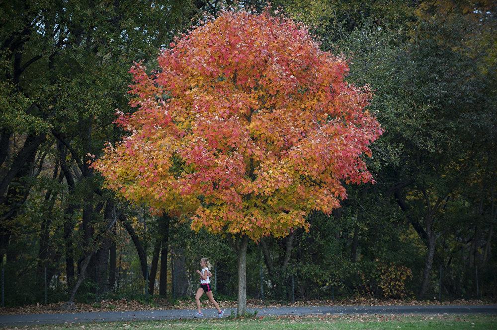 Jogging dans le Van Cortland Park, New York, Etats-Unis