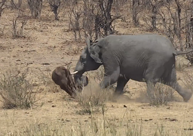 Ne jamais énerver un éléphant!