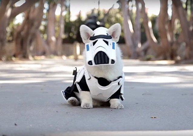 Un chien déguisé en soldat impérial