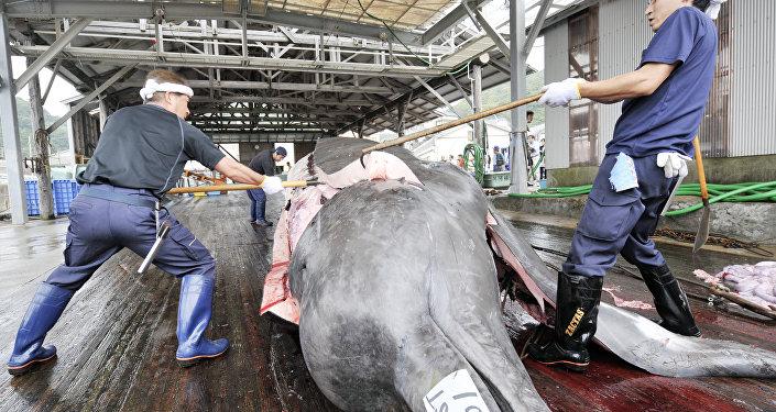 Tuer les baleines au nom de la « science » ? Le Japon s'y connait.