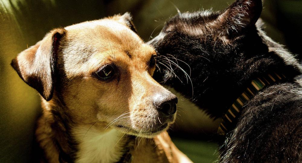 Amitié entre animaux