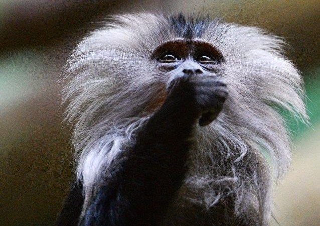 Non, un macaque ne peut pas être un auteur
