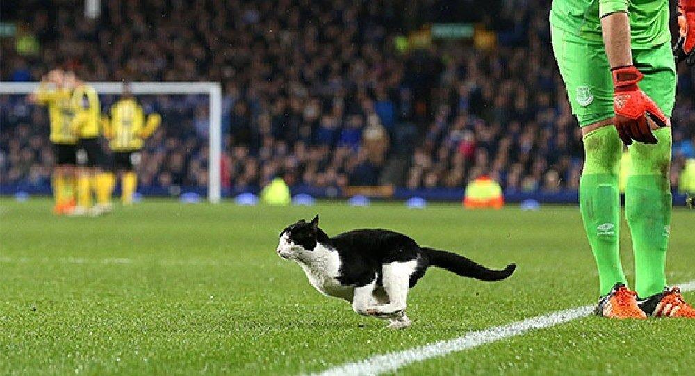 Un chat interrompt un match de football en Angleterre