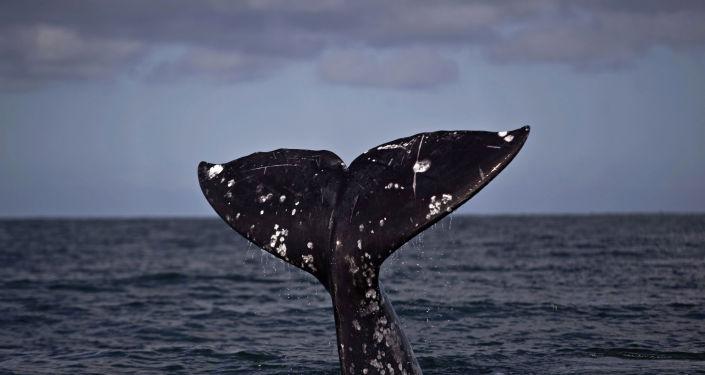Une baleine