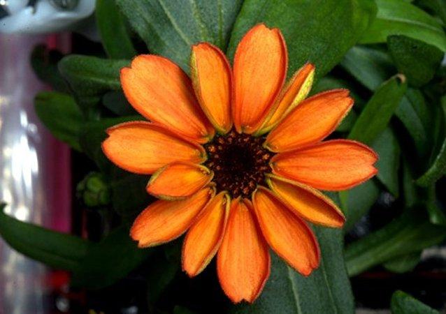 La première fleur spatiale a embelli la Station spatiale internationale